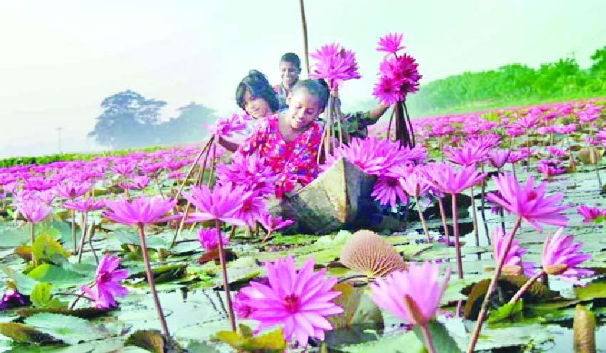 ভিন্নমাত্রার বিনোদন দেবে শাপলার বিল